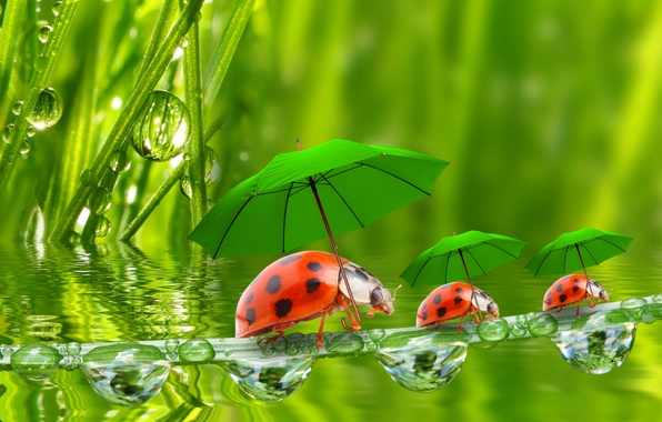 Picture water, droplets, umbrellas, ladybugs, a blade of grass, grass