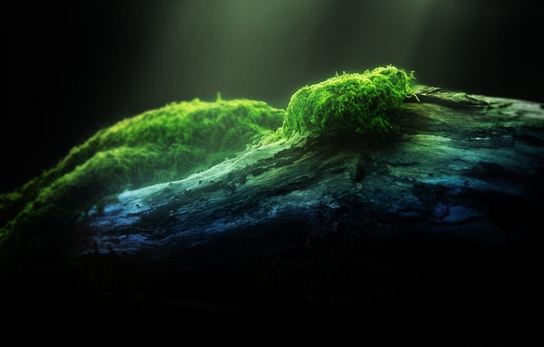 Picture forest, macro, light, nature, green, tree, green, moss, light, forest, wood, macro, moss