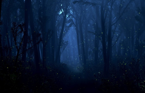 Picture forest, light, trees, night, fireflies, lights