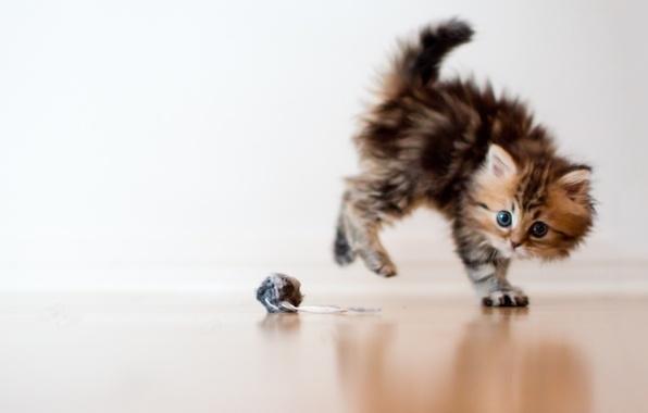 Picture cat, macro, kitty, fright, toy, ball, Daisy, Ben Torode