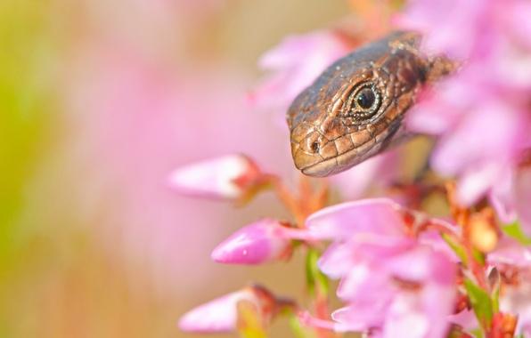 Picture macro, flowers, head, lizard