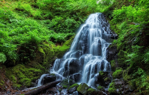 Picture stones, waterfall, moss, plants, Jungle