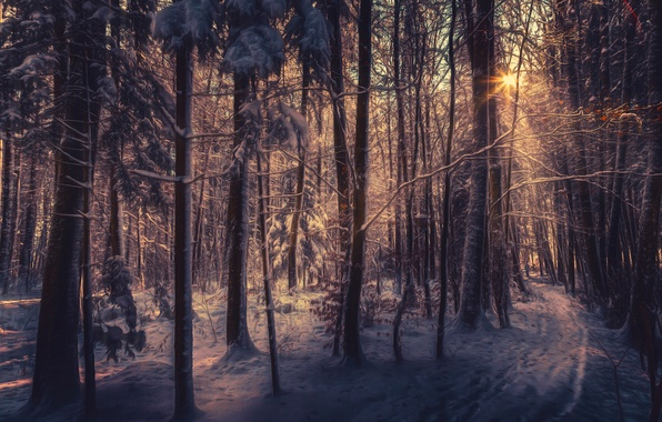 Picture snow, treatment, sunlight, winter forest