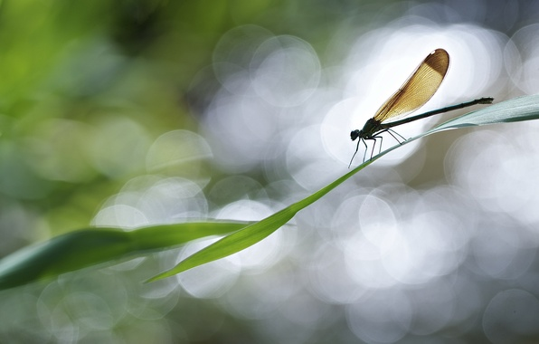 Picture leaves, glare, plant, dragonfly, bokeh