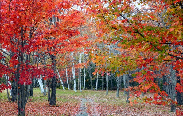Picture autumn, forest, leaves, trees, grove, path