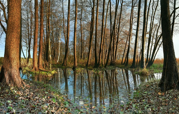 Picture autumn, leaves, water, trees, nature, foliage, Germany