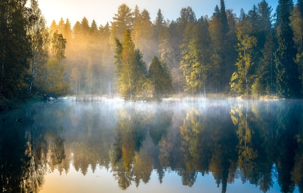 Picture autumn, forest, trees, fog, lake, reflection, dawn, morning, Finland