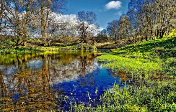 Picture FOREST, GRASS, WATER, REFLECTION, TREES, RIVER, GREEN, DIRECTION