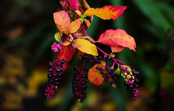 Picture leaves, branch, fruit