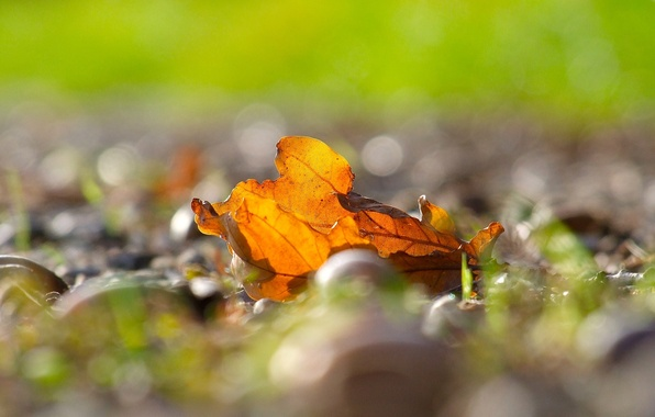 Picture autumn, leaves, macro, yellow, background, widescreen, Wallpaper, blur, leaf, wallpaper, leaves, yellow, widescreen, background, autumn, …