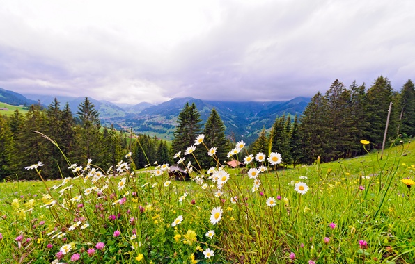 Picture trees, flowers, mountains, nature, Switzerland, meadow, Switzerland