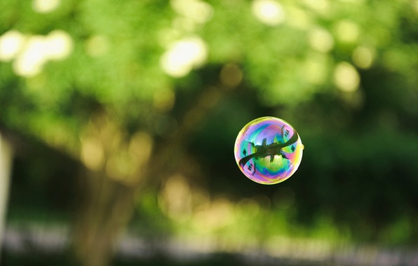 Picture greens, reflection, photo, ball, bubble, soap