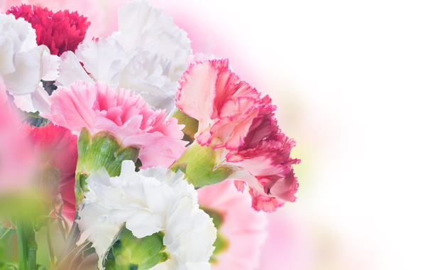 Picture flowers, leaves, clove, pink and white