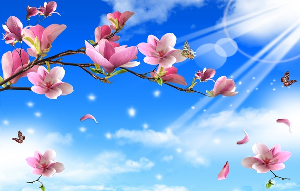 Picture rays, butterfly, flowers, nature, solar, twigs
