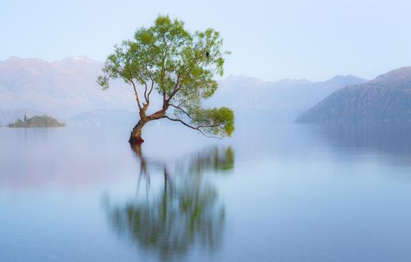 Picture nature, lake, tree, bird, morning, New Zealand