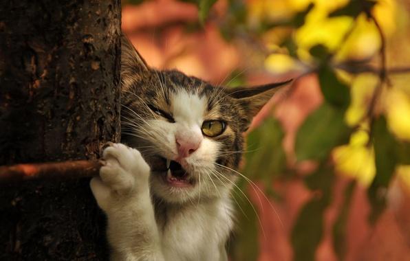 Picture cat, cat, tree, branch, fangs, trunk