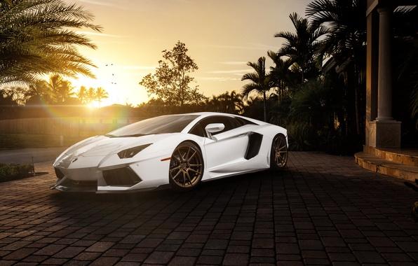 Picture white, the sun, palm trees, Lamborghini, before, white, Blik, mansion, Lamborghini, front, LP700-4, Aventador, Lamborghini, …