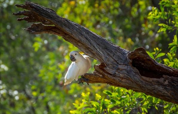 Photo wallpaper bokeh, tree, greens, parrot, bird