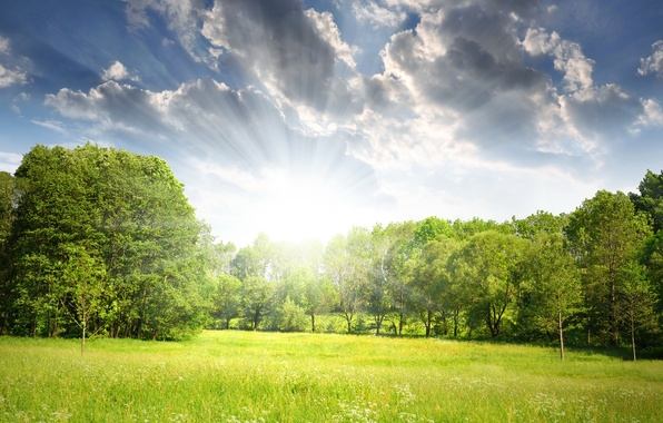 Picture forest, the sun, rays, trees, glade, spring