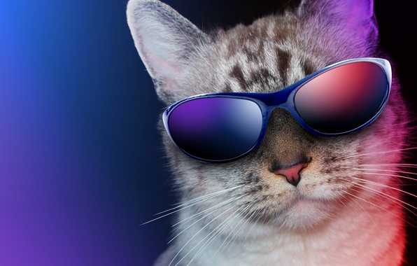 Picture cat, close-up, background, humor, glasses
