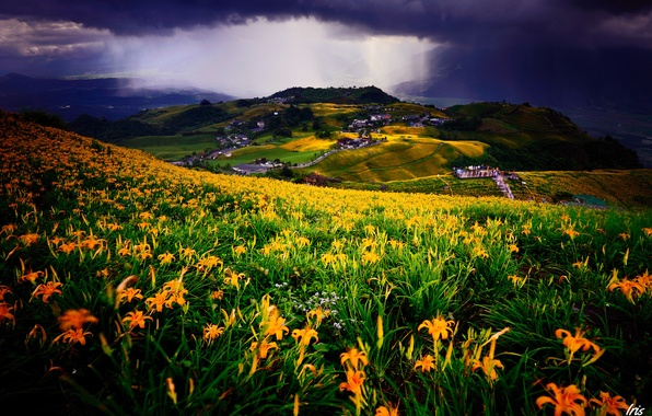 Picture field, landscape, flowers, clouds, Lily, view, home, meadow, buildings, settlement