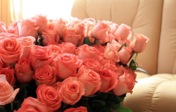 Picture love, flowers, holiday, romance, roses, day, pink, birth
