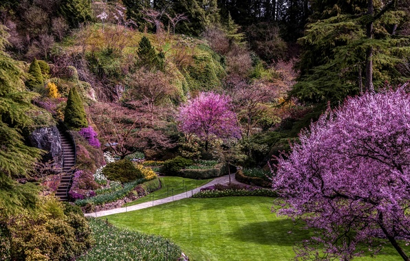 Picture trees, flowers, lawn, the rise, garden, Canada, ladder, track, steps, Vancouver, the bushes, blooming, Butchart …