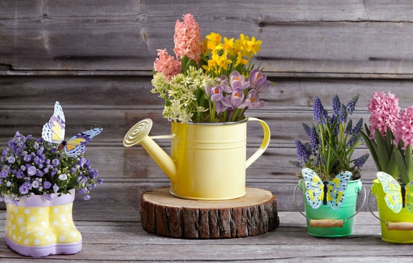 Picture butterfly, flowers, crocuses, lake, daffodils, decor, Muscari, bouquets, hyacinths, buckets