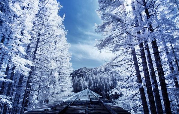 Picture trees, nature, rails, railroad, nature