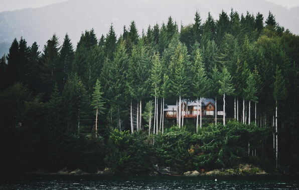 Picture forest, mountains, fog, lake, house, ate