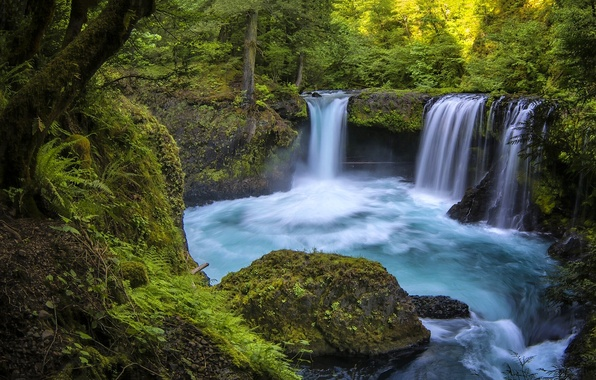 Picture forest, river, waterfall, Washington, Washington, Columbia River Gorge, the Columbia river gorge, Little White Salmon …