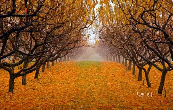 Picture autumn, leaves, trees, fog, Park, garden, british columbia, canada, okanagan valley