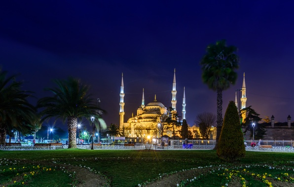 Picture night, the city, palm trees, photo, lawn, Cathedral, temple, mosque, the monastery, Turkey, Istanbul