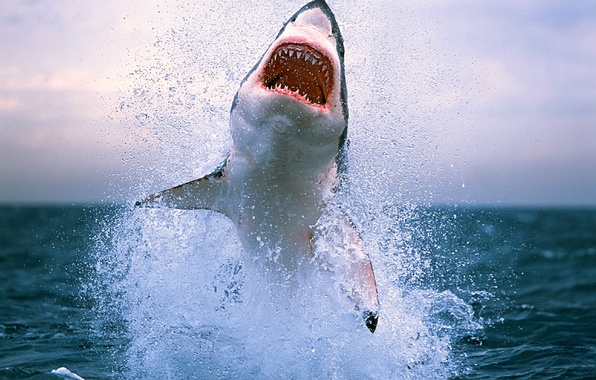 Picture sea, wave, animals, water, squirt, the ocean, danger, shark, teeth, sharks, photo with animals