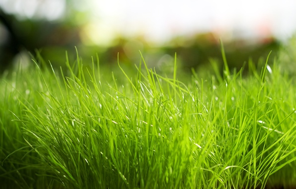 Picture nature, green, Grass