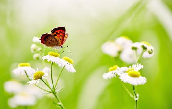 Picture butterfly, flowers, stems, wings, buds, bokeh