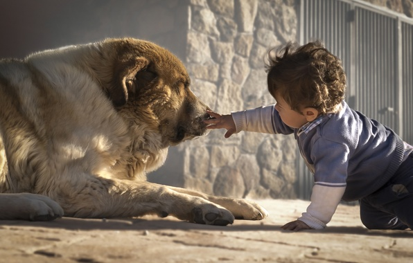 Picture dog, boy, friends, child, dog, familiarity
