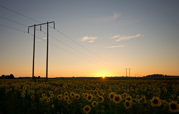 Picture field, the sky, the sun, clouds, sunflowers, sunset, nature, wire, the evening, support, Sweden