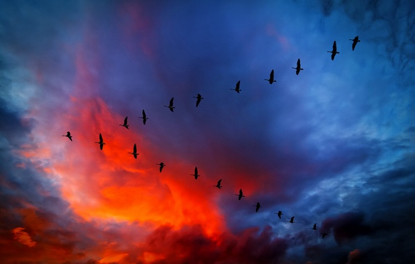 Picture the sky, clouds, flight, sunset, birds, clouds, glow, wedge