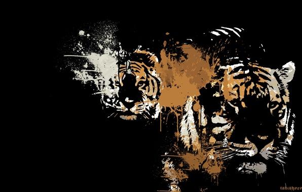 Picture animals, predators, art, color, black background, tigers
