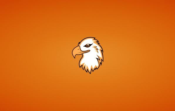 Picture animal, bird, eagle, minimalism, head, Orlan, eagle
