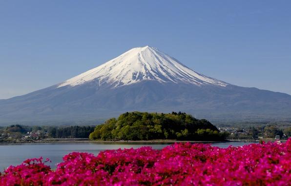 Picture snow, flowers, mountain, focus, peak, Fuji