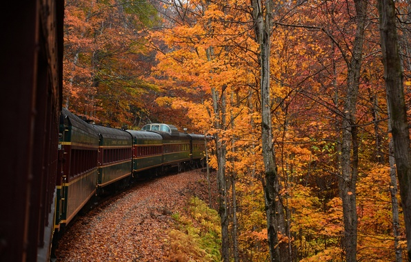 Picture autumn, forest, trees, train, the car