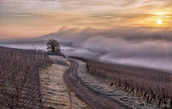 Picture France, brouillard, brume, Alsace Region, Alsace, vignes
