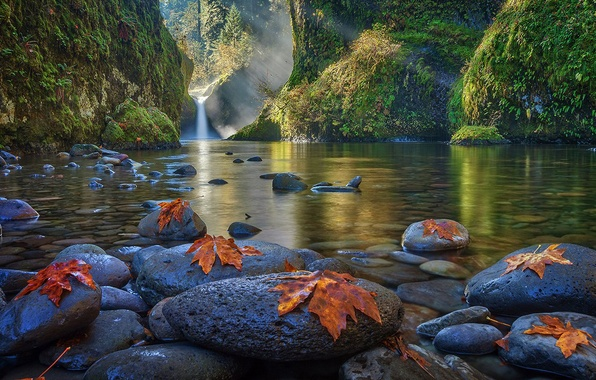 Picture forest, leaves, water, trees, mountains, lake, stones