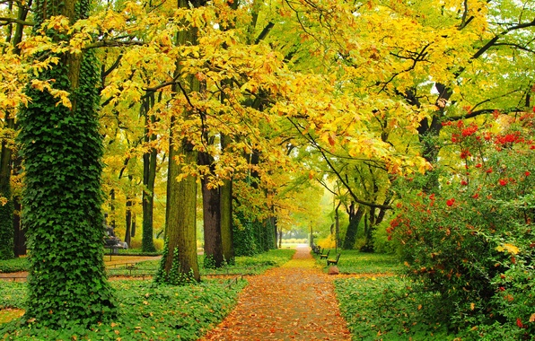 Picture autumn, leaves, trees, Park, foliage, track, yellow, green, alley, benches