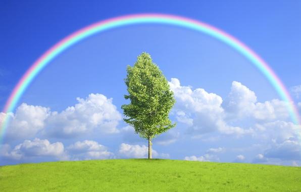Picture field, nature, tree, rainbow, rainbow, field, nature, tree