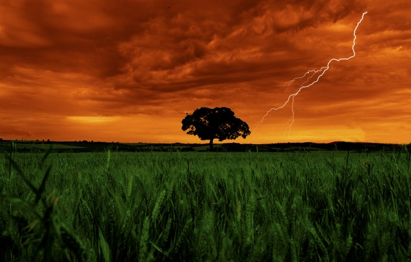 Picture Clouds, Sky, Grass, Landscape, Lightning, Color, Field, Garden, Vegetation