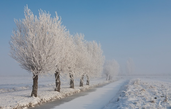 Picture winter, frost, snow, trees, landscape, nature