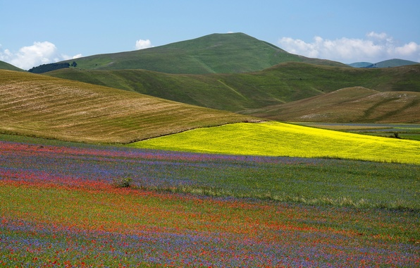 Picture field, grass, flowers, mountains, nature, Maki, valley, slope, meadow, Italy, Umbria